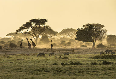 Safari et faune sauvage